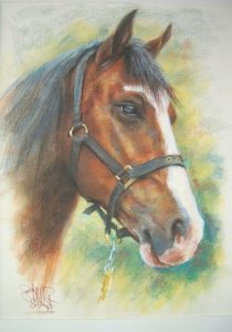 Horse Portrait by Stan Hurr