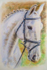 Horse Portrait by Stan Hurr