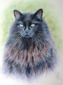 Cat Portrait by Stan Hurr