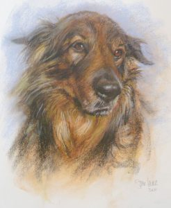 Dog Portrait by Stan Hurr